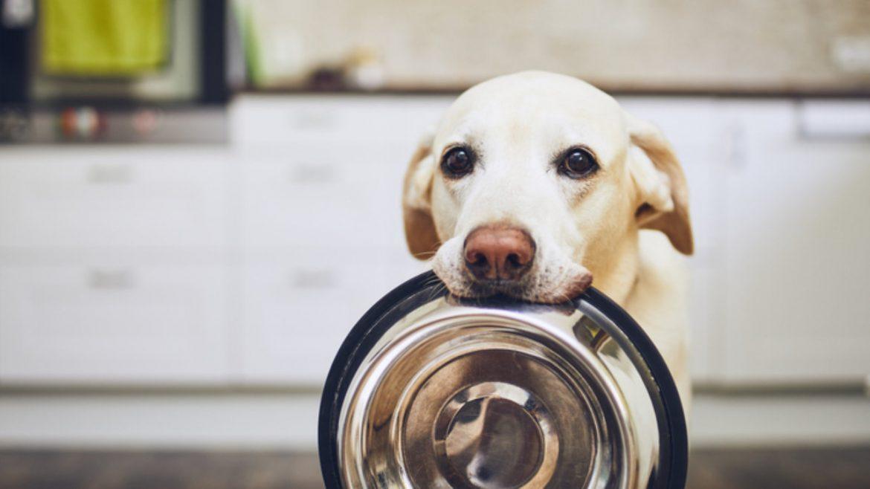 5 Jenis Makanan Anjing yang Perlu Diketahui